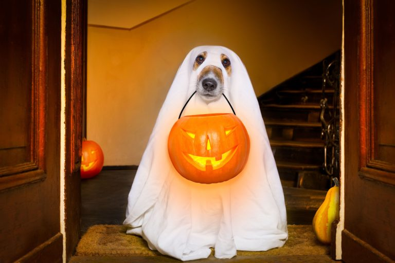 Halloween è alle porte